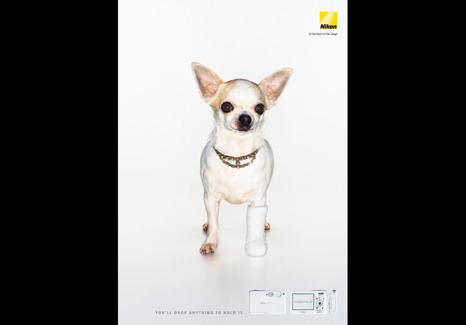 S1-SP-Dog
